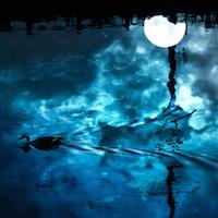 水面下に潜った浮気の証拠集め・解決法